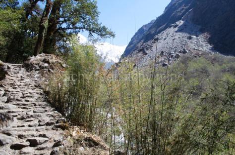 Langtang trail 23