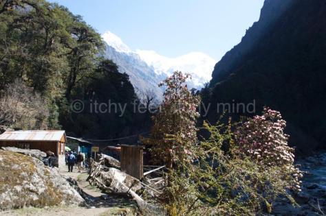 Langtang trail 24