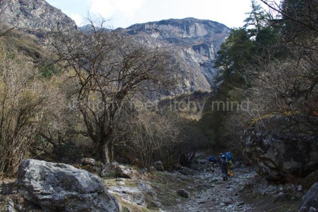 Langtang trail 29