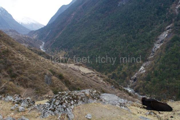 Langtang trail 33
