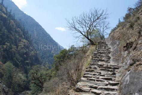 Langtang trail 39